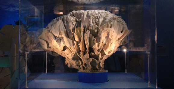 Natural History Museum - Coral Reefs Exhibition