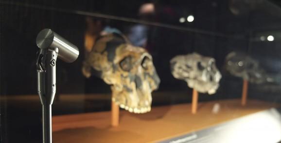 Natural History Museum - Human Evolution